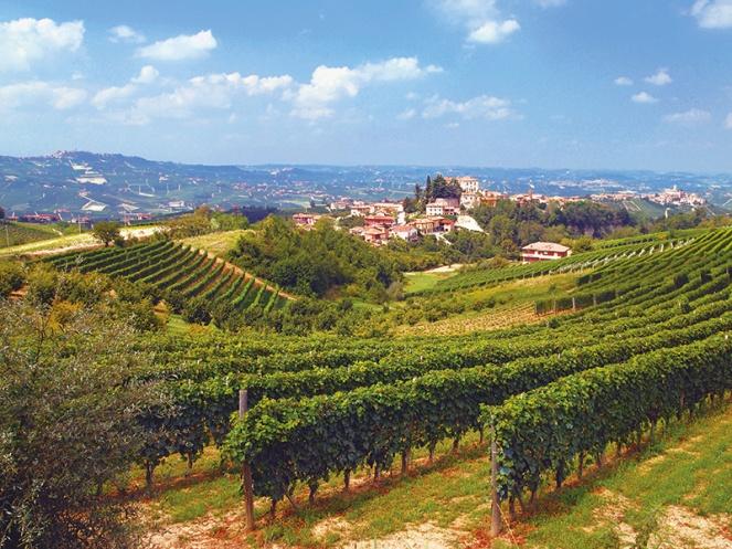 Langhe, Wein, Piemont