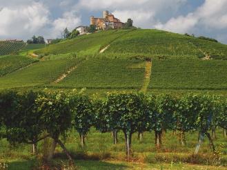 Langhe, Piemont, Wein
