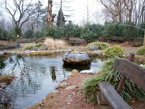 Locarno's Camellia Park